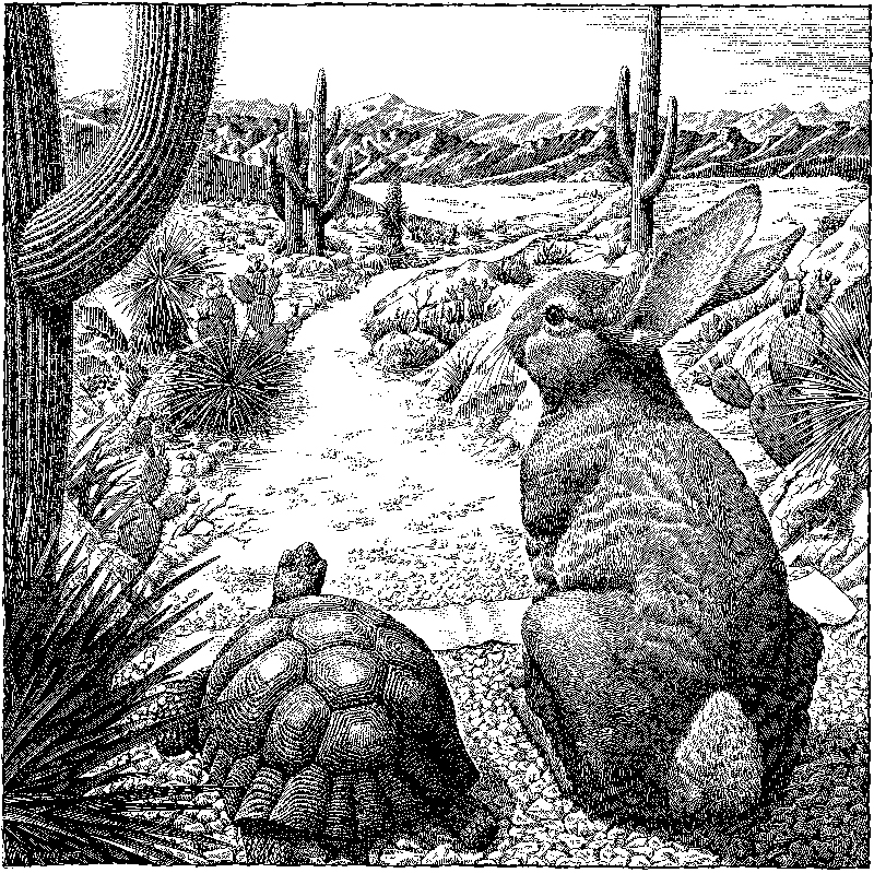 Tortois And The Hare In Arizona